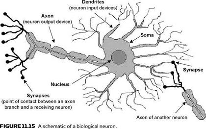 Biological and artificial neurons everything about solar energy figure 1117 schematic diagram of a multilayer feed forward neural network ccuart Choice Image