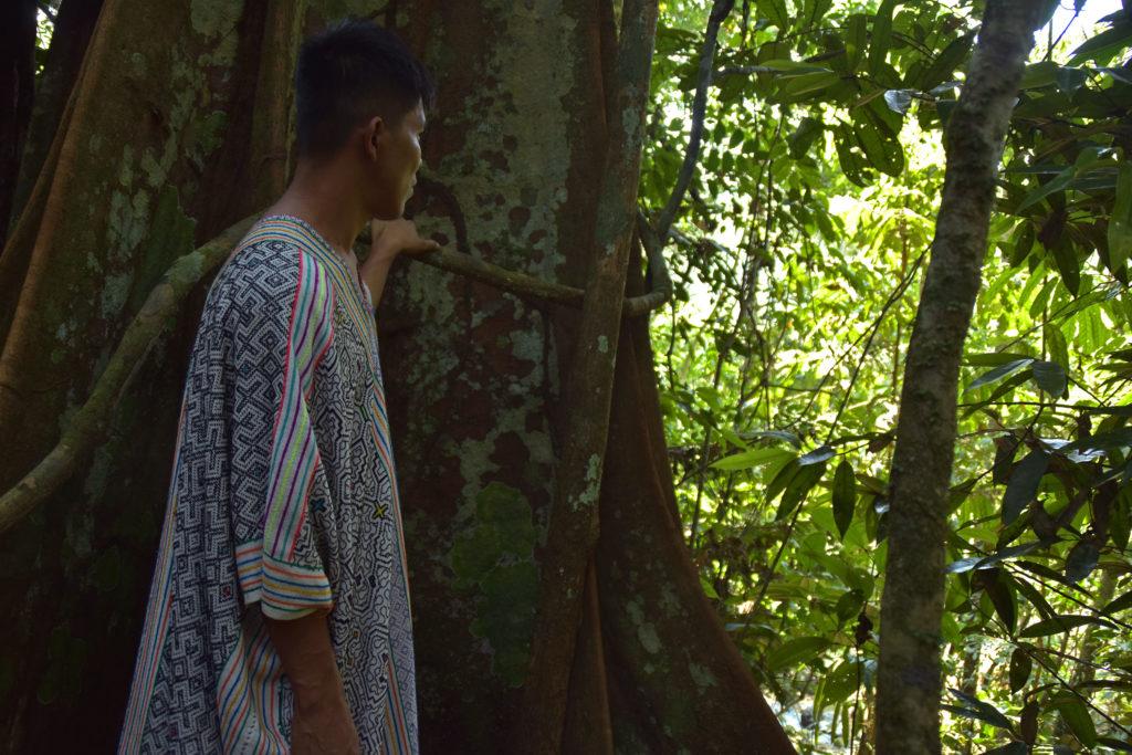 Аяваска в культуре шаманов: наркотик или лекарство